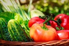 Nya grönsaker i vävd korg royaltyfri bild