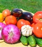 Nya grönsaker på det gröna gräset Royaltyfria Foton