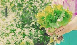 Nya grönsaker på en bio lantgård för hem Organiska produkter Royaltyfria Foton