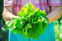 Nya grönsaker på en bio lantgård för hem Organiska produkter Fotografering för Bildbyråer