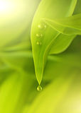 nya greenleaves Royaltyfria Foton