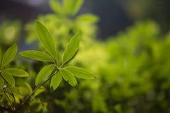 nya greenleaves Arkivfoto