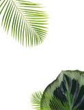 nya greenleaves vektor illustrationer
