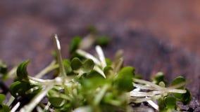 nya greenleaves Materiell?ngd i fot r?knat Gröna sidor för sallad Gröna sidor för att laga mat för strikt vegetarian arkivfilmer