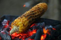 Nya grillade eller grillade majskolvar Grillad havre som är till salu på gatan Fotografering för Bildbyråer