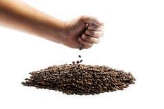 Nya grillade kaffebönor som häller i hand Arkivbilder
