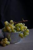 Nya gröna druvor Arkivbild