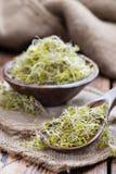 nya groddar för broccoli Royaltyfri Fotografi