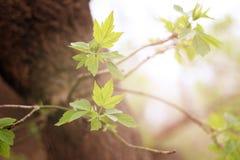 Nya groddar på trädstammen royaltyfri fotografi