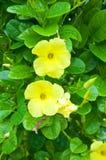 Nya gula tropiska blommor Arkivfoton