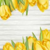 Nya gula tulpan på träbakgrund 10 eps Royaltyfria Foton