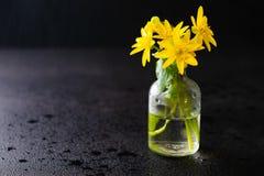 Nya gula vårblommor i en liten glasflaska på en mörk svart bakgrund royaltyfri bild