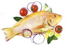nya guldtomater för fisk royaltyfri foto