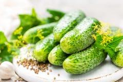 Nya gurkor och ingredienser för beskydd Arkivfoto