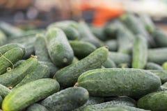 nya gurkor på räknaren av en livsmedelsbutik eller en supermarket gröna gurkor för nytt barn gurkor på hyllan av lagret Royaltyfri Foto