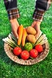 nya händer för korgkvinnlig som rymmer grönsaker Royaltyfria Foton