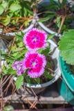nya härliga blommor arkivfoto