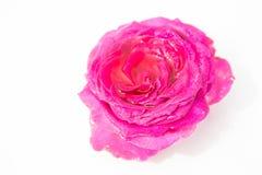 nya härliga blommor Mjukhet och angenäm lukt ro för foto för härlig bokehträdgårdlampa naturliga royaltyfria foton