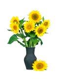 Nya härliga solrosor i vasen som isoleras på en vit bakgrund Royaltyfria Bilder