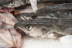Nya hake på en fisk marknadsför arkivbild