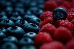 Nya hallon och blåbär stänger sig upp fotografering för bildbyråer