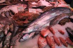 Nya havsfiskar på krossad is Royaltyfria Foton
