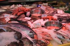 Nya havsfiskar på krossad is Royaltyfri Foto
