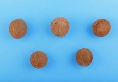 Nya hawaianska kokosnötter på en ljus blå bakgrund Sex hela, stora, nya, organiska och tropiska frukter av kokosnötter Exotiska c Arkivbild