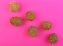 Nya hawaianska kokosnötter på en ljus rosa bakgrund Sex hela, stora, nya, organiska och tropiska frukter av kokosnötter Exotiska  Arkivfoton