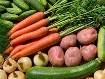 nya homegrown grönsaker royaltyfria bilder