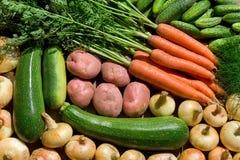 nya homegrown grönsaker arkivbilder