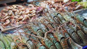 Nya hummer på is Gatamat i närbild Asien för taggiga hummer Kulör aptitretande artropodslookz Levande skaldjur stock video