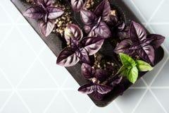 Nya ingredienser för basilikaväxt till ditt kök Arkivbild