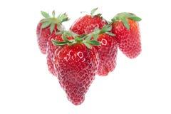 nya isolerade röda jordgubbar Royaltyfri Fotografi