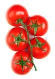 nya isolerade tomater Royaltyfria Bilder