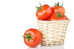 nya isolerade tomater Royaltyfri Bild