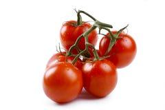 nya isolerade tomater Royaltyfri Fotografi