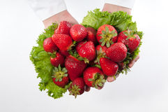 Nya jordgubbar Royaltyfri Fotografi
