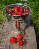 nya jordgubbar Royaltyfria Bilder