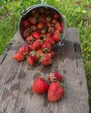 nya jordgubbar Royaltyfri Bild