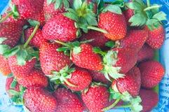 nya jordgubbar för ask Royaltyfri Fotografi