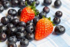 nya jordgubbar för blåbär Fotografering för Bildbyråer