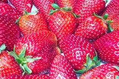 nya jordgubbar för closeup Arkivbild