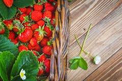 nya jordgubbar för korg Royaltyfri Bild