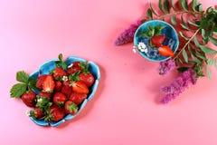 Nya jordgubbar i blåa plattor, med rosa blommor och is sund mat På rosa bakgrund Top beskådar Fritt utrymme, uppsättning Royaltyfri Foto