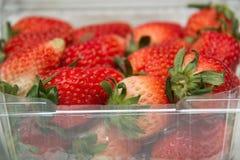 Nya jordgubbar i en plast- ask Royaltyfri Foto
