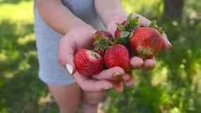 Nya jordgubbar i händer av flickan i trädgården 1 lager videofilmer