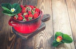 Nya jordgubbar i röd kruka Arkivbilder