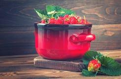 Nya jordgubbar i röd kruka Arkivfoto