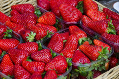 Nya jordgubbar i Tuscany Arkivfoto